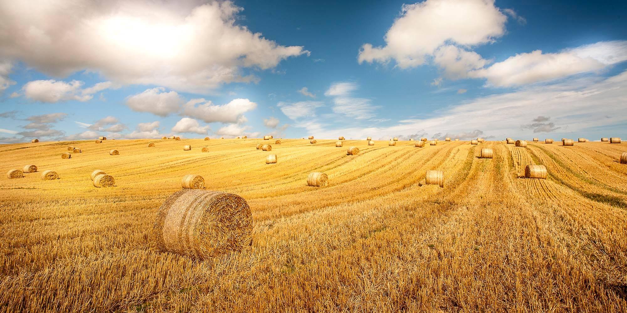 Agroturystyka Dęblin